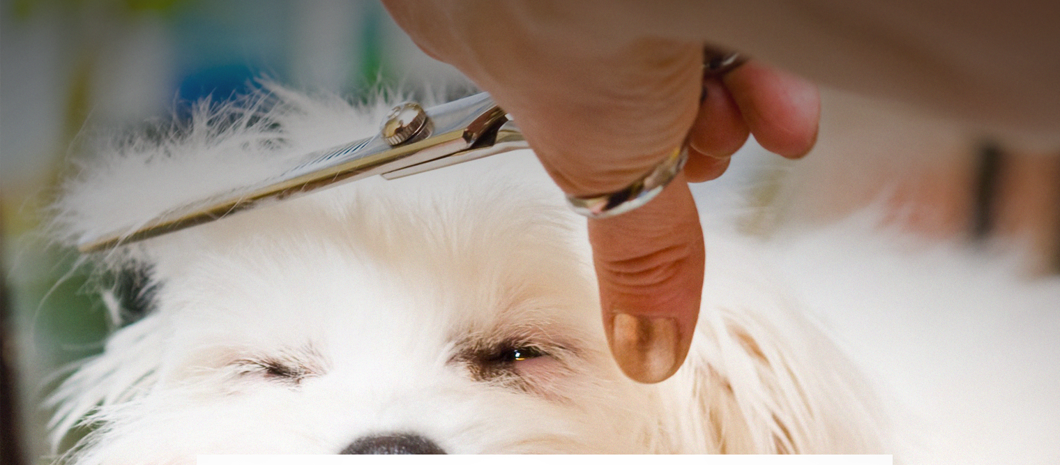 Grooming equipment and professional pet cosmetics